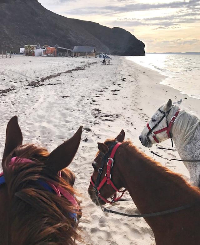playa-de-la-paz-horse