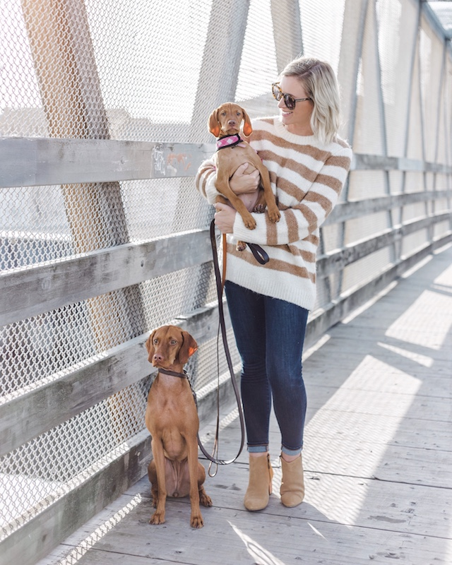 Vizsla sisters Louise and Wilma | My Style Diaries blogger Nikki Prendergast