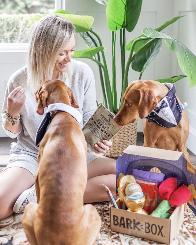 Vizslas Weeze and Wilma love BarkBox | My Style Diaries blogger Nikki Prendergast