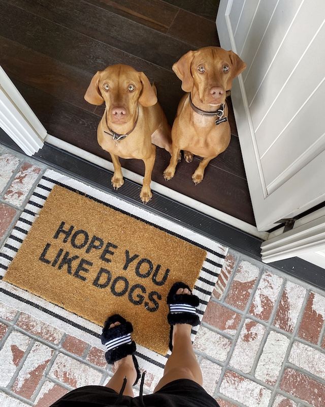 Vizsla pups, Emu slippers, Nickel Designs doormat | My Style Diaries blogger Nikki Prendergast