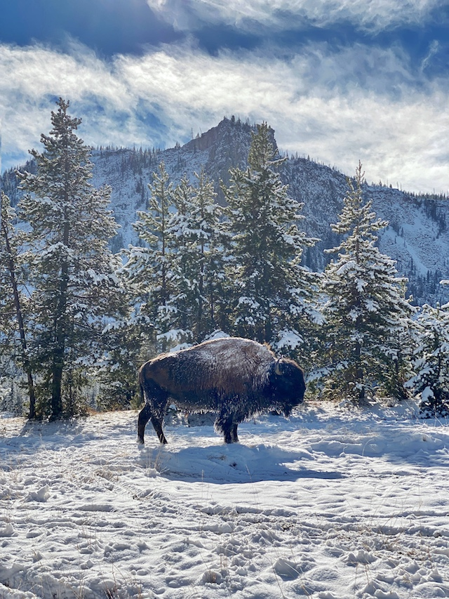 Winter visit to Yellowstone National Park | My Style Diaries blogger Nikki Prendergast