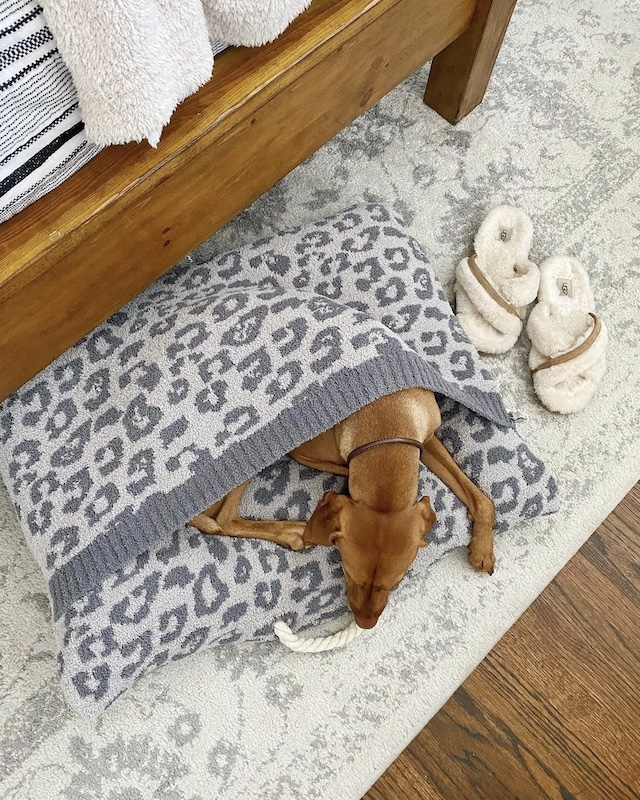 Barefoot Dreams pet bed in the Nordstrom Anniversary sale | My Style Diaries blogger Nikki Prendergast